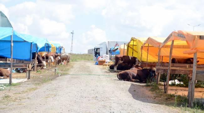 Tuzla'da Kurbanlık Yerleri Belirlendi